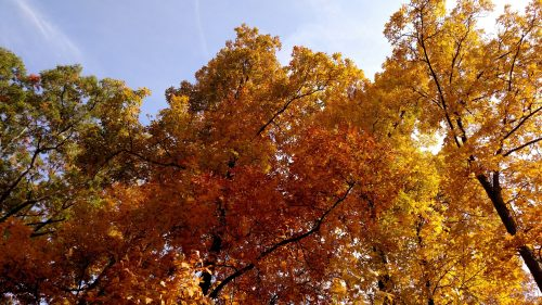 Colored leaves and sky